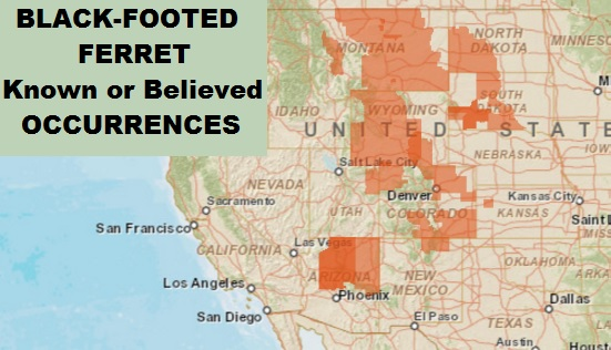 Black-footed Ferret Known or Believed Occurrences Map